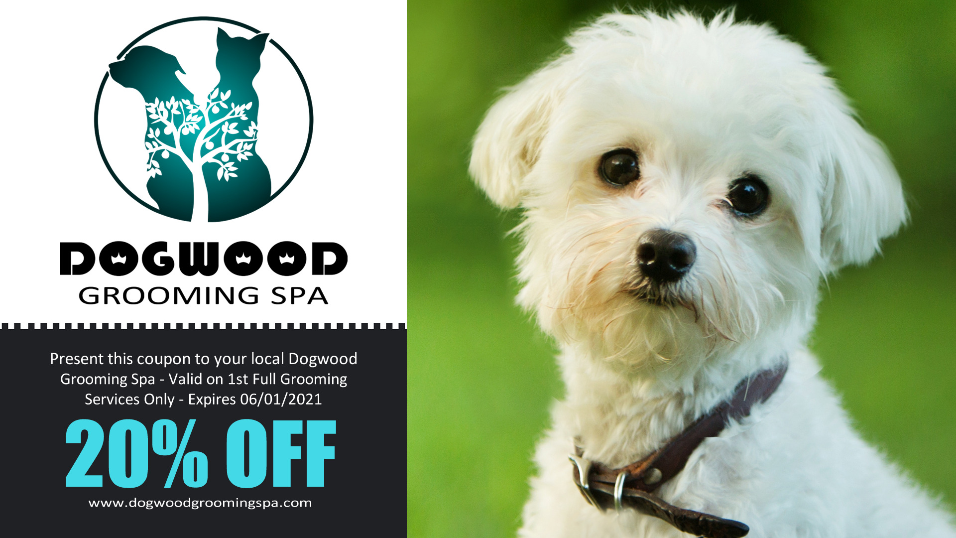 Dogwood Grooming Spa LLC on Visibility Kings | Professional Pet Groomer in Knoxville Tn | Offering Full Dog Grooming, Creative Pet Coloring, and Pet Boarding